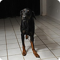 Adopt A Pet :: Kingsley - Loxahatchee, FL