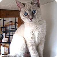 Adopt A Pet :: Brule - Davis, CA