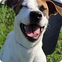 Adopt A Pet :: Bailee - Von Ormy, TX