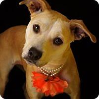 Adopt A Pet :: Juno - Fort Smith, AR