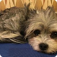 Adopt A Pet :: Mariah - Thousand Oaks, CA