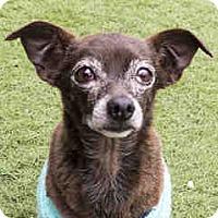 Adopt A Pet :: Vernon - Agoura, CA