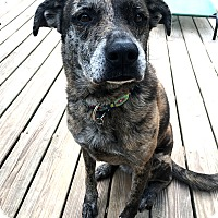 Adopt A Pet :: Lilly - Vancouver, BC