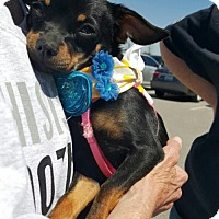 Adopt A Pet :: Bella - Nicholasville, KY