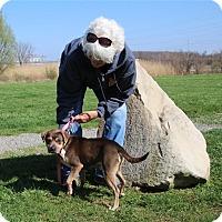 Adopt A Pet :: Billy - Elyria, OH