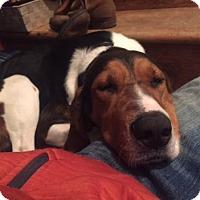 Adopt A Pet :: Willow - Ontario, ON