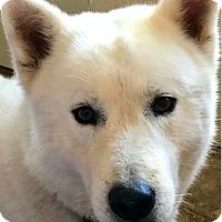 Adopt A Pet :: KODIAK - Yucca Valley, CA