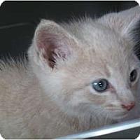Adopt A Pet :: Sam - Port Republic, MD