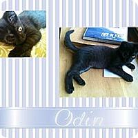 Adopt A Pet :: Odin - Washington, DC