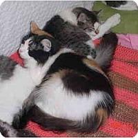 Adopt A Pet :: Lacey - Pendleton, OR