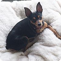 Adopt A Pet :: Rhea - Sacramento, CA