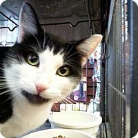 Adopt A Pet :: Ursela - Hamilton, ON