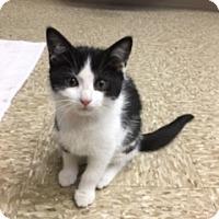 Adopt A Pet :: Merida - Medina, OH