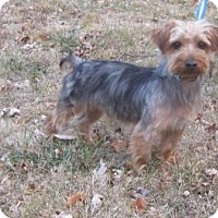 Adopt A Pet :: CHESTER - New palestine, IN