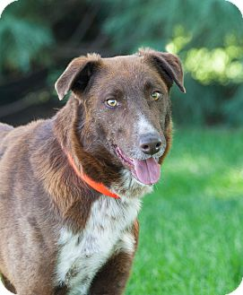 Border Collie Mix Dog for adoption in Washoe Valley, Nevada - Skip