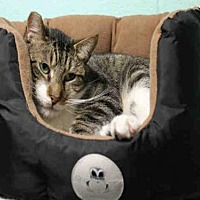 Adopt A Pet :: RASCAL - Hampton Bays, NY
