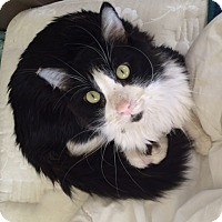 Adopt A Pet :: Bo-loves cats and dogs - Los Angeles, CA