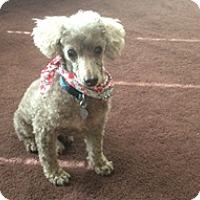 Adopt A Pet :: LITTLE JAKE - Melbourne, FL