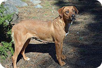 German Shepherd Dog Mix Dog for adoption in Mountain Center, California - Saffron