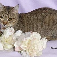 Adopt A Pet :: Blanket - Kerrville, TX