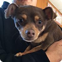 Adopt A Pet :: CALI - San Pablo, CA