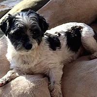 Adopt A Pet :: Little Boy & Ania - Homer Glen, IL