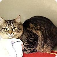 Adopt A Pet :: Hermosa - Chicago, IL