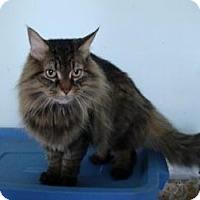 Adopt A Pet :: Kobee (Adoption Pending) - Arlington, VA