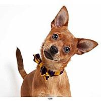 Adopt A Pet :: Hope - New York, NY