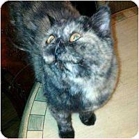 Adopt A Pet :: Cami - Columbus, OH