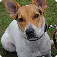 Adopt A Pet :: Glory - Orlando, FL