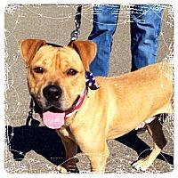 Adopt A Pet :: Joey - Dearborn, MI