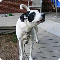 Adopt A Pet :: Woody - Baden, PA
