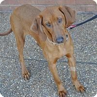 Adopt A Pet :: Llewelyn - Atlanta, GA