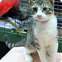 Adopt A Pet :: Jessamon - Gonzales, TX