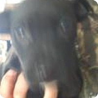 Adopt A Pet :: Rigs - Kendall, NY