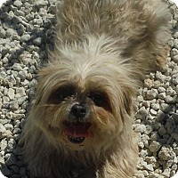 Adopt A Pet :: Gidgett - Flanders, NJ