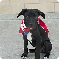 Adopt A Pet :: Ruger - Houston, TX