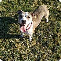 Adopt A Pet :: Anika - Dayton, OH