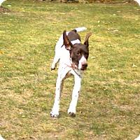 Adopt A Pet :: Diamond - Alma, WI