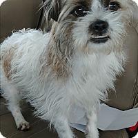 Adopt A Pet :: Gizmo - Ogden, UT