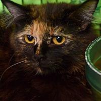 Adopt A Pet :: Peeps - Des Moines, IA