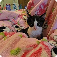 Adopt A Pet :: Jazz - Phoenix, AZ