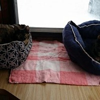 Adopt A Pet :: Lola & Lucy - Jefferson, OH