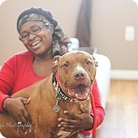 Adopt A Pet :: Carmen - Reisterstown, MD