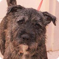 Adopt A Pet :: Major Tom - Alpharetta, GA