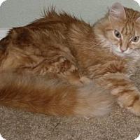 Adopt A Pet :: Loki - Davis, CA