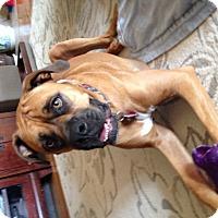 Adopt A Pet :: Ellie May #4083 - Dayton, OH