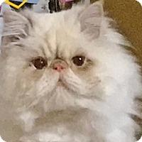 Adopt A Pet :: Gemini - Davis, CA