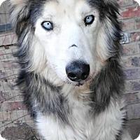 Adopt A Pet :: **NANOOK - Peralta, NM
